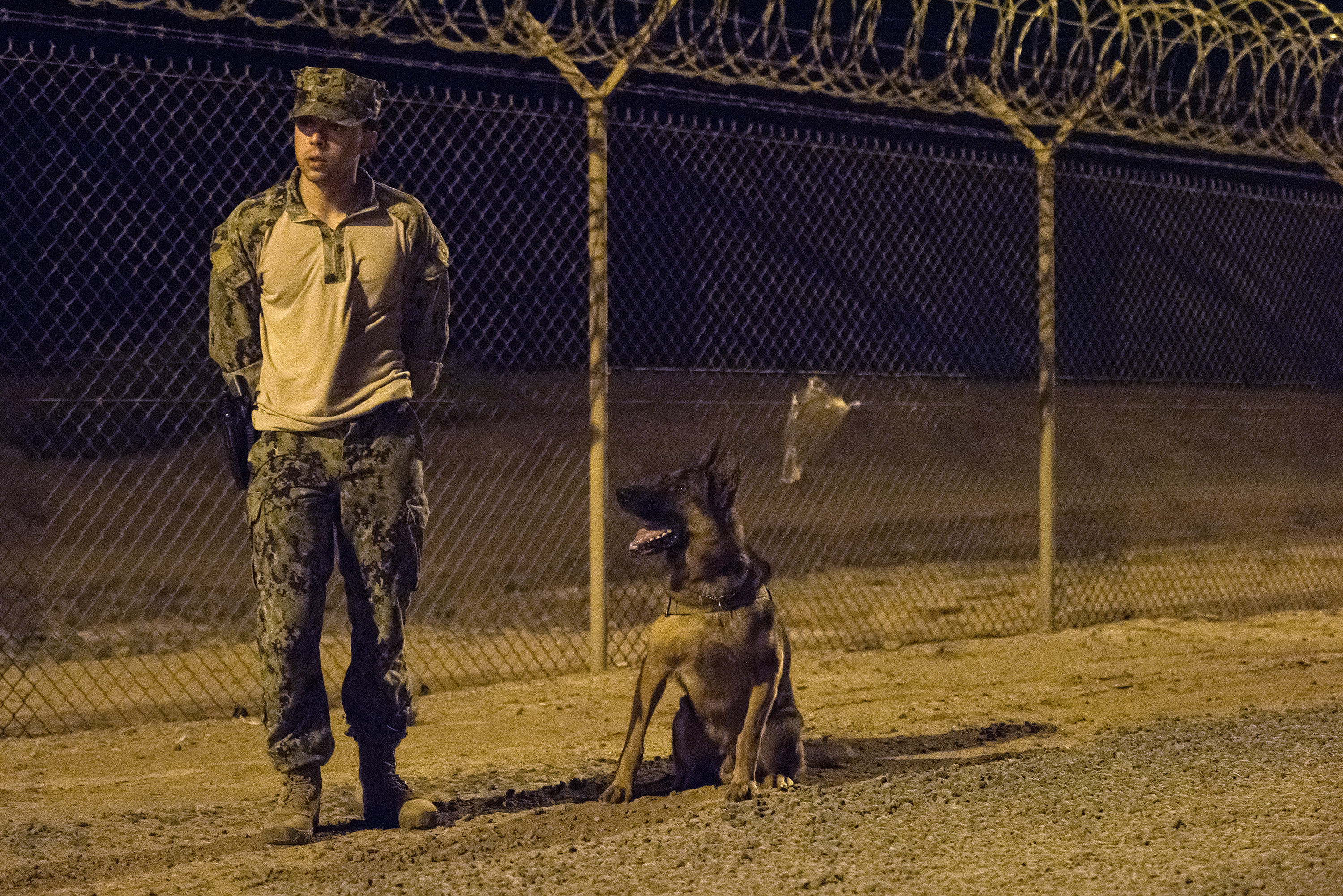 U.S. Navy Master-at-Arms 3rd Class Jordan Fuentes, a military working dog (MWD) handler and MWD Rex conduct proficiency training on Camp Lemonnier, Djibouti, July 31, 2018. Military Working Dogs can be used to perform searches, subdue suspects, and detect explosives and narcotics. (U.S. Air National Guard photo by Master Sgt. Sarah Mattison)
