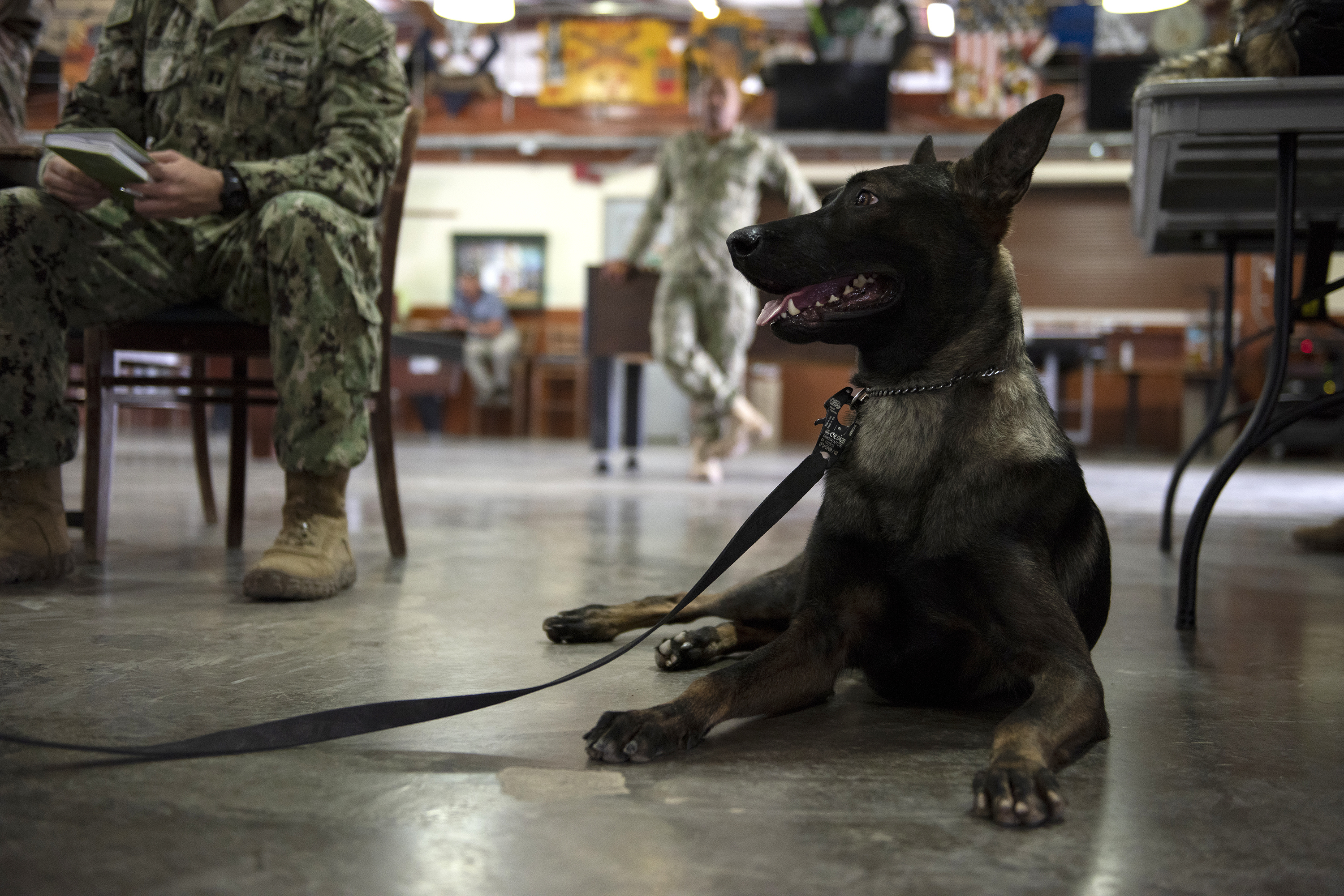U.S. Navy Military Working Dog Pponder lies on the floor on Camp Lemonnier, Djibouti, Aug. 18, 2018. Pponder participated in a hands-on canine tactical combat casualty care training for service members, to help prepare them for treating canines in the field. (U.S. Air National Guard photo by Master Sgt. Sarah Mattison)