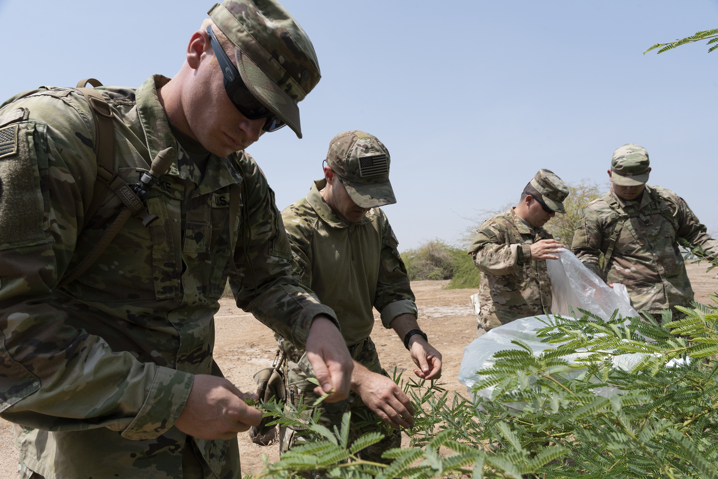 U.S. Soldiers assigned to Combined Joint Task Force Horn of Africa collect leaves during survival skills training on Camp Lemonnier, Djibouti, Oct. 13, 2018. The service members placed the leaves in a plastic bag and exposed the bag to the sun, which allowed condensation to gather and enabled them to create an alternative water source in an austere environment. (U.S. Air National Guard photo by Master Sgt. Sarah Mattison)